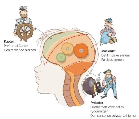 hvoran-påvirkes-din-hjerne-adhd-add-aarhus-vivi-hinrichs